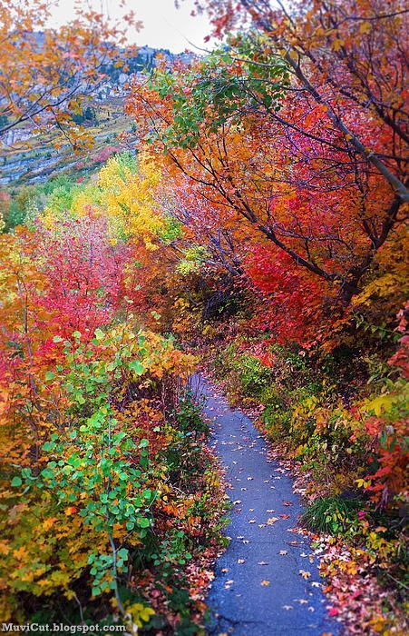 COLORFUL NATURE #PHOTOGRAPHY