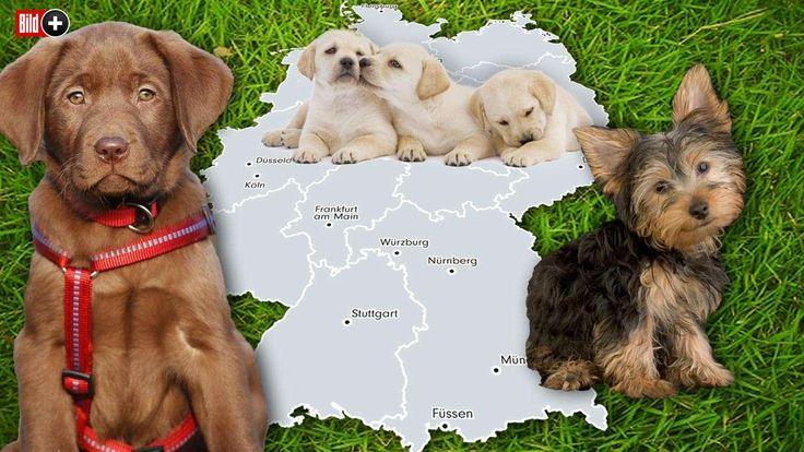 40 STÄDTE IM KOSTEN-VERGLEICH Der große Hundesteuer-Atlas Teil 1 der BILD-Hundesteuer-Serie