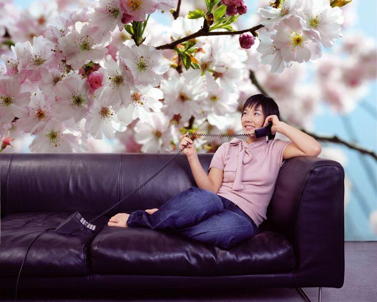 Fototapet Floral - Flori de Cires Primavara decorare pereti. Aplicare usoara si…