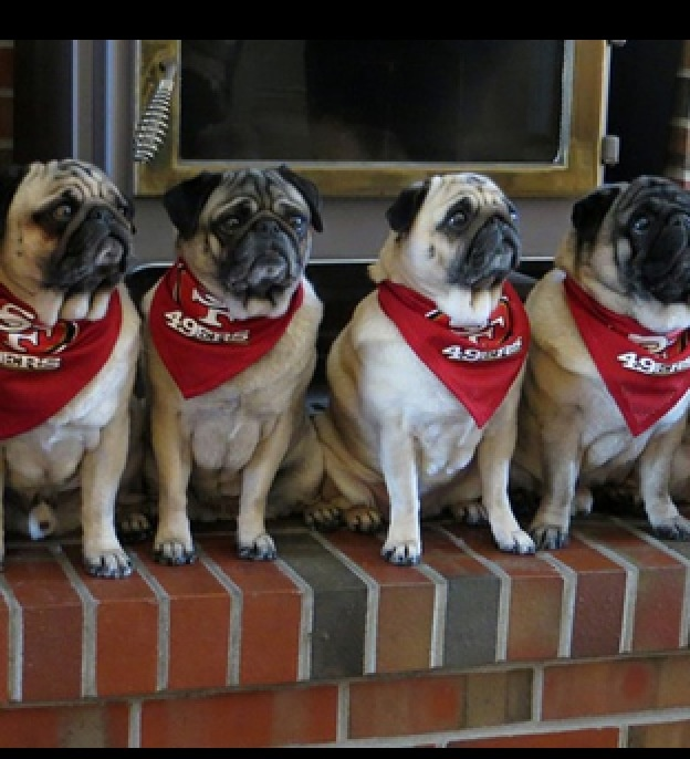 Sf Giants Dog Day
