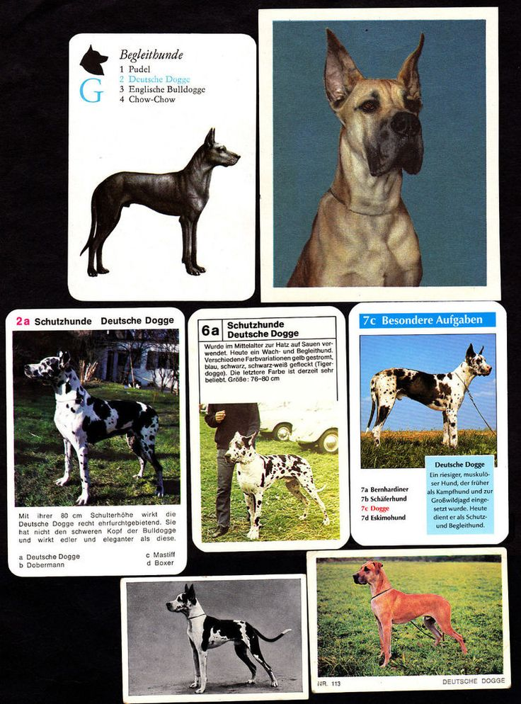 Lot Of 13 Different Vintage GREAT DANE/GERMAN MASTIFF Dog Cigarette Cards