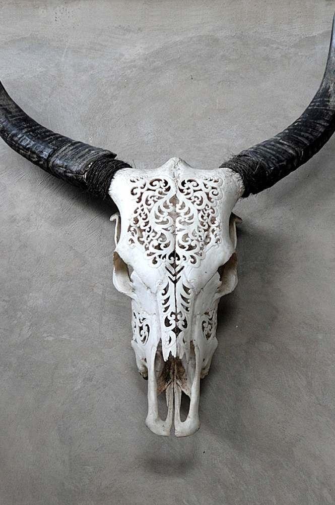 Carved lace Buffalo longhorn skulls #longhorn #steer #skull