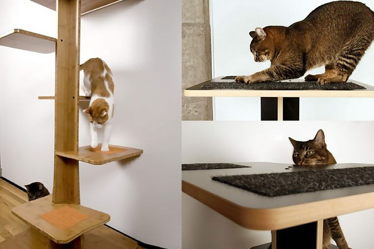 Fresco of Contemporary Cat Furniture for Urban Pet lovers