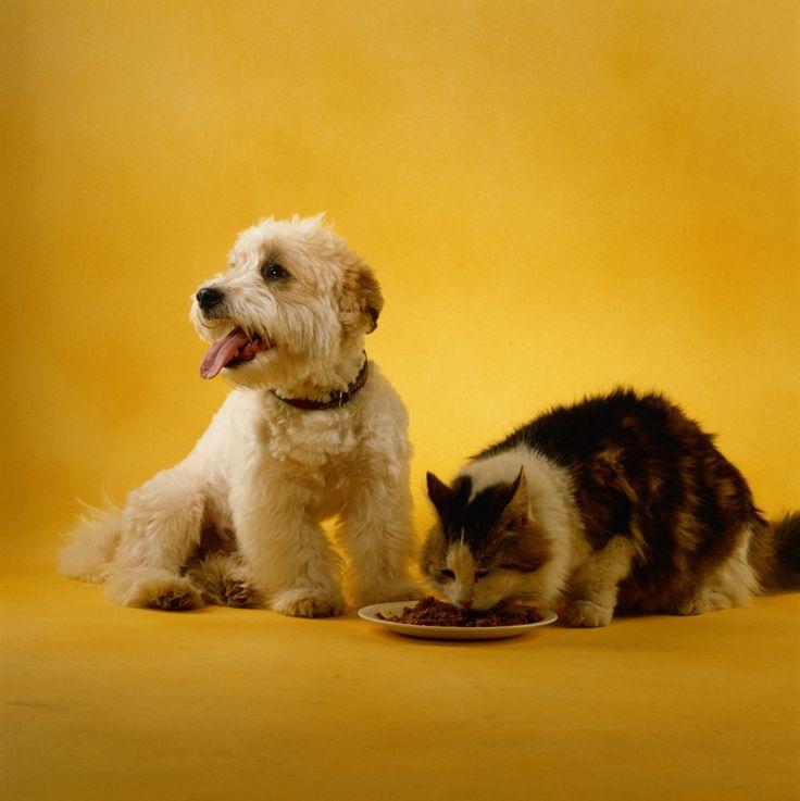 16 best tienda vegaestar images on pinterest store door prizes plantas que repelen a los perros y a los gatos solutioingenieria Gallery