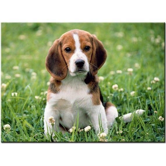 Diy Diamond Painting Cross Stitch Beagle Dog Pet Home Decor Full
