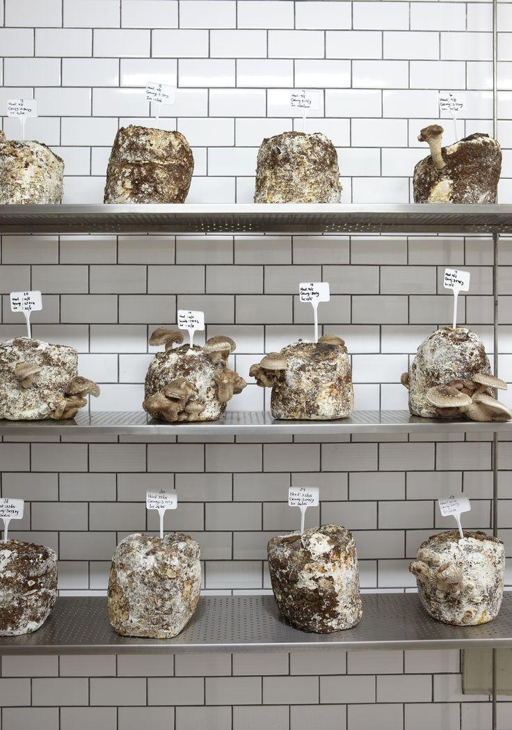 Different variety of mushrooms. #GourmetAfrica #Babylonstoren #foodie