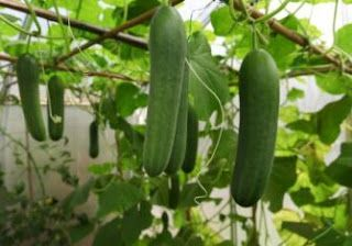 Organic Gardens Network: How to Grow in a Greenhouse During Winter