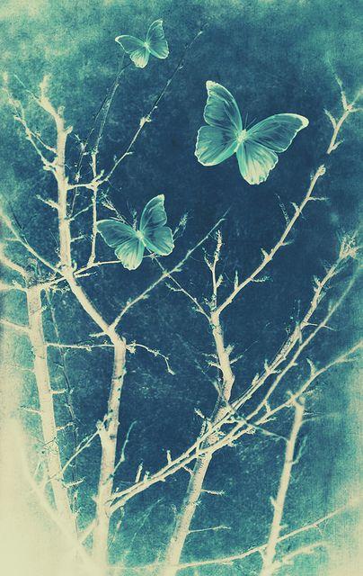 Butterflies Untitled tjn