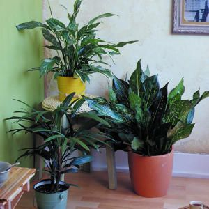 Easy care houseplants houseplants low lights and plants for Easy maintenance plants and flowers