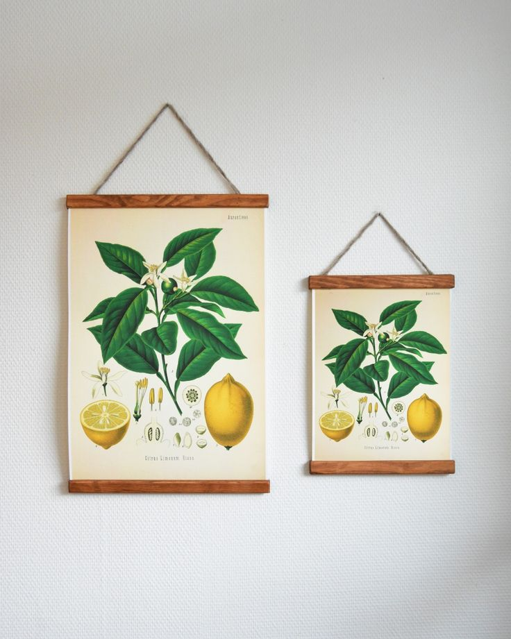 Lemons | Poster | Handcrafted frames | Biology inspired | Swedish pinetree | Wool from Iceland | Inspiration!