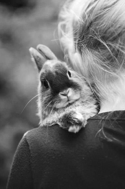 Bunny -- love the crossed paws! crescentmoon b & w