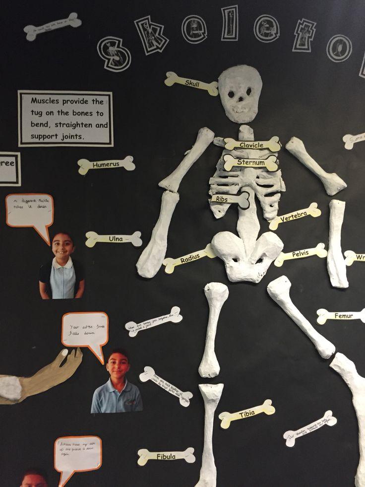 42 件の「「lesson ideas」のアイデア探し - pinterest」のおすすめ, Skeleton