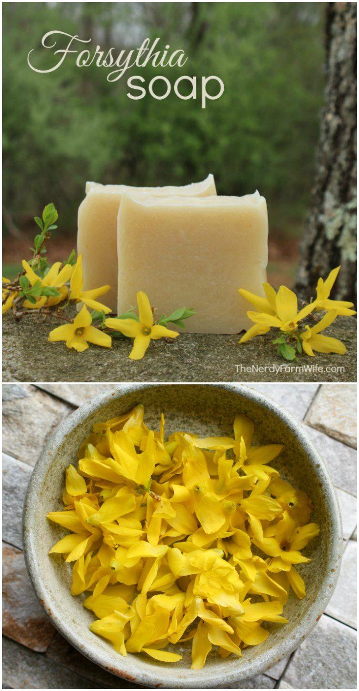Forsythia Flower Soap Recipe 706 best Sharonu0027s