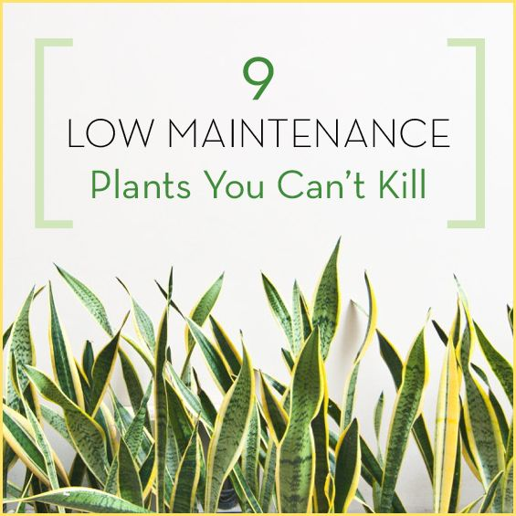 Best 25 low maintenance indoor plants ideas only on for Best low maintenance plants