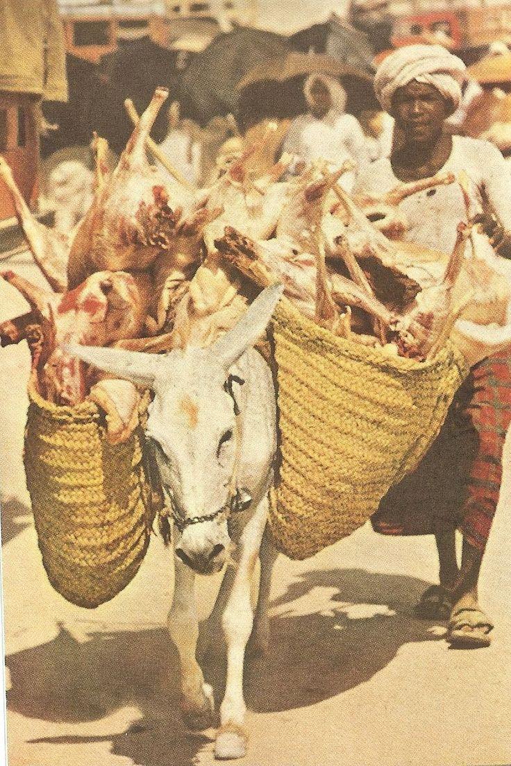 Hajj 1953: Donkeys were used to transport carcasses of sacrificial animals.
