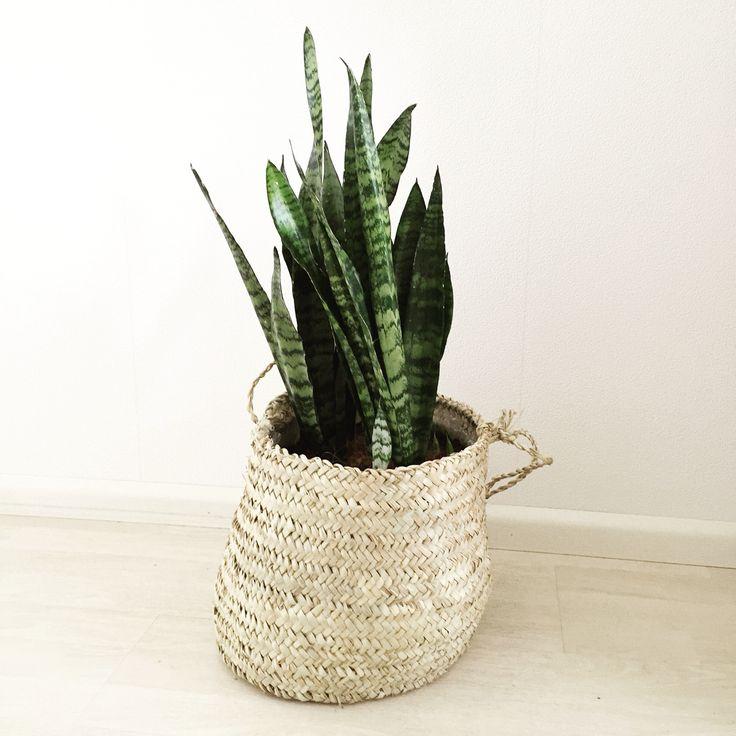 Plant in rieten mand   Peet likes