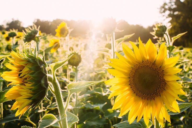 5 saker att bli självförsörjande på - Ibland är det lättare att odla för självförsörjning, än att hitta köpealternativ som passar både plånbok och miljö.