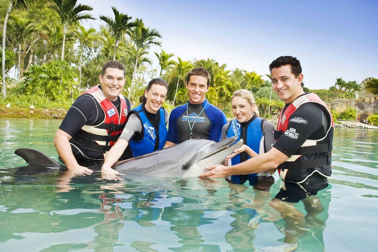 Here's the answer for today's #gcfuncation quiz! We're swimming with dolphins at Sea World #GoldCoast #travel