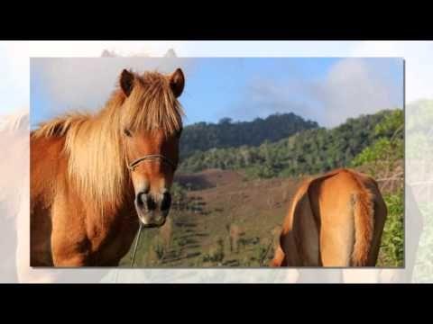 Rahmat Subhan Documentary: FOTO SLIDE DONGGO, BIMA