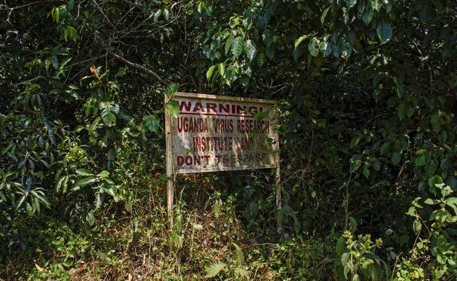 Zika Forest                                                       …