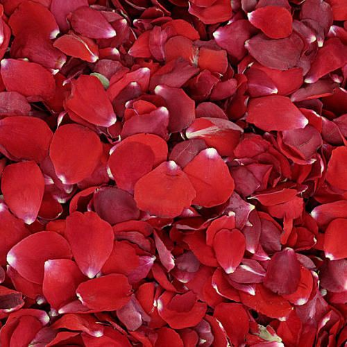 Red Rose Petals from Flyboy Naturals. All Natural, real rose petals...perfect for Christmas proposals, winter weddings, Valentines Day, Romantic evenings & more. http://flyboynaturals.com/bridal-red-preserved-freeze-dried-rose-petals/