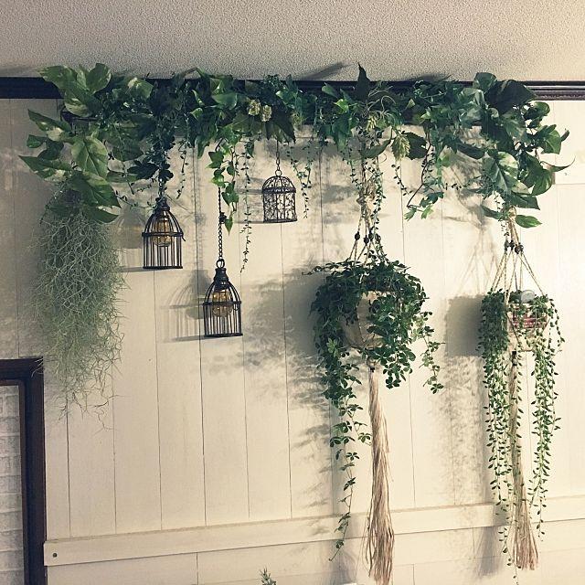 女性で、2LDKの壁/天井/ガーデニング/観葉植物/ダイソー/いいね!押し逃げばかりでごめんなさい。/いつもいいねやコメありがとうございます♡…などについてのインテリア実例を紹介。「この前作ったフェイクグリーンの棚にリアルモスとシュガーパイン、グリーンネックレスをぶら下げで見ました❤️ ニトリの鳥籠風の雑貨にはセリアのフェイク電球を入れてぶら下げてます( ´ ▽ ` )ノ 取り敢えずですが、満足な出来❤️❤️❤️」(この写真は 2016-11-01 17:25:10 に共有されました)