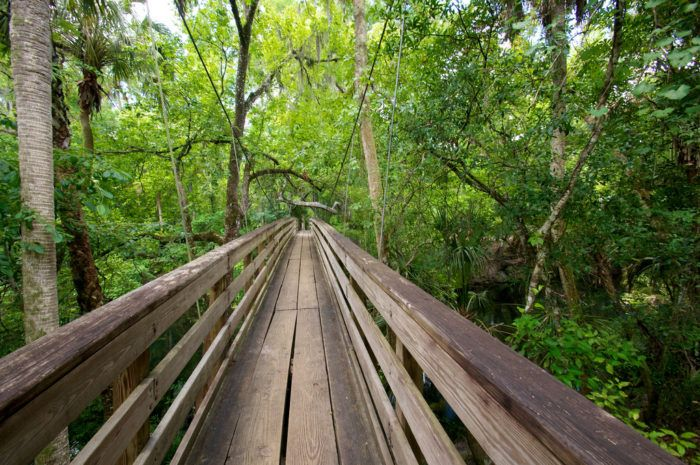 Here you will find plenty of boardwalks and paths through this exceptional landscape and a suspension bridge that takes you through the tree canopy.