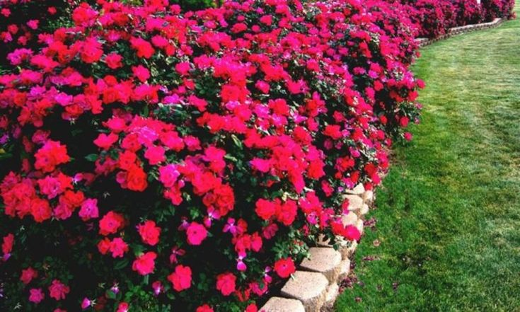 flower bed designs for partial sun