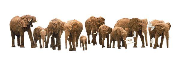 Space 4 Elephants Foundation