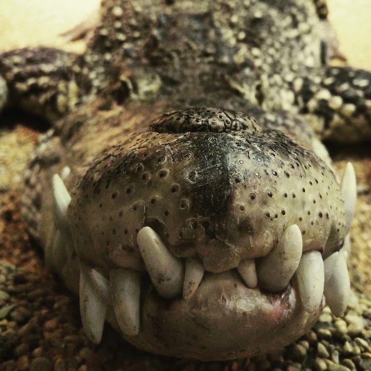 Skansen crocodile | por A.Cahlenstein Photography
