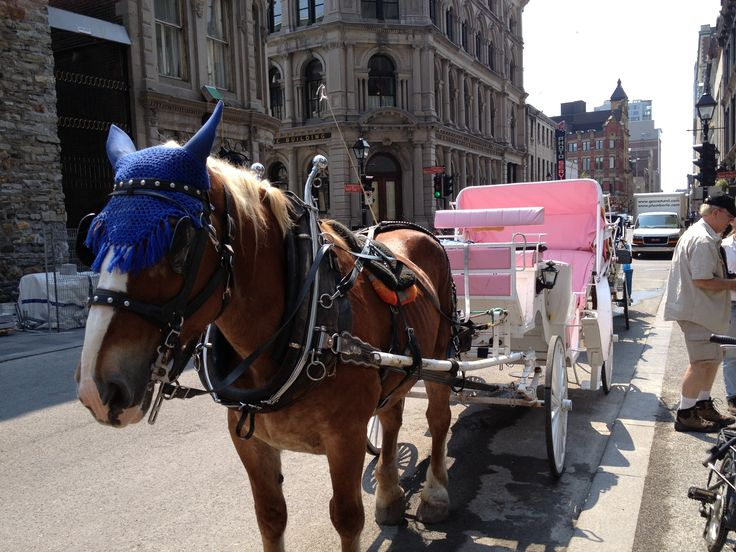 Going for a horse drawn carriage ride in Montreal