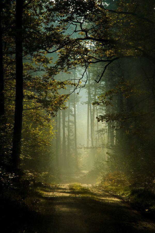 "ethereal-vistas: ""Mysterious forest by Robert Tarczyński """