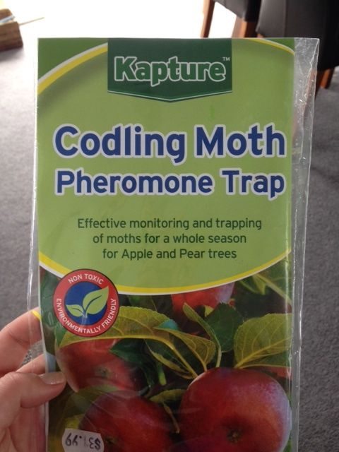 Codling Moth Pheromone Trap Apple Trees NZ. I fitted the Codling Moth Trap near the apple trees today. Now to count the moths weekly once the apples blossom! The trap does not look very attractive but hopefully it works well. September 2013
