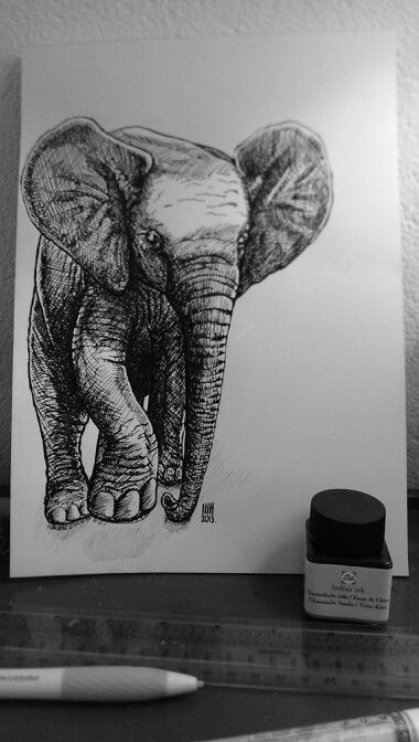 Baby elephant pend an Indian ink sketch