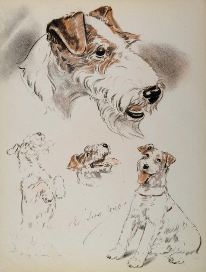 1944 BOOKPLATE ILLUSTRATION OF WIRE-HAIRED FOX TERRIER by DIANA
