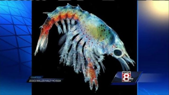 #HeyUnik  Foto Bayi Lobster Warna-Warni Ini Bikin Heboh Dunia #Alam #Hewan #Unik #YangUnikEmangAsyik