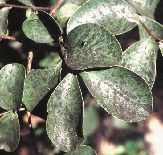 Best Plant Diseases Pests Images Pinterest