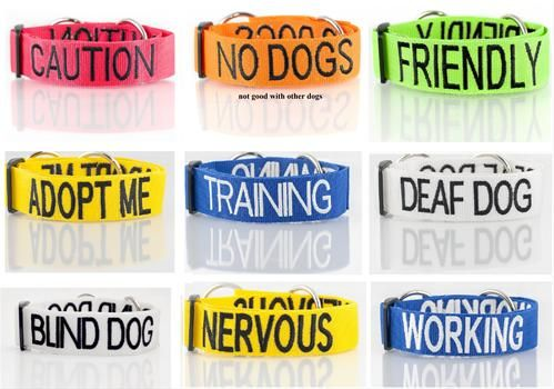 Different Colored Collars and Leashes