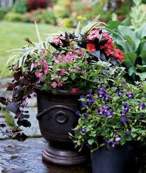 A simple way to choose plants (issues of sun and soil aside) is by color. Even the most basic approach yields gorgeous results, as seen here.