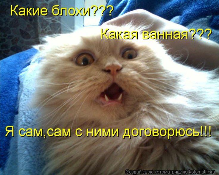 приколы с котами с надписями: 23 тыс изображений найдено в Яндекс.Картинках