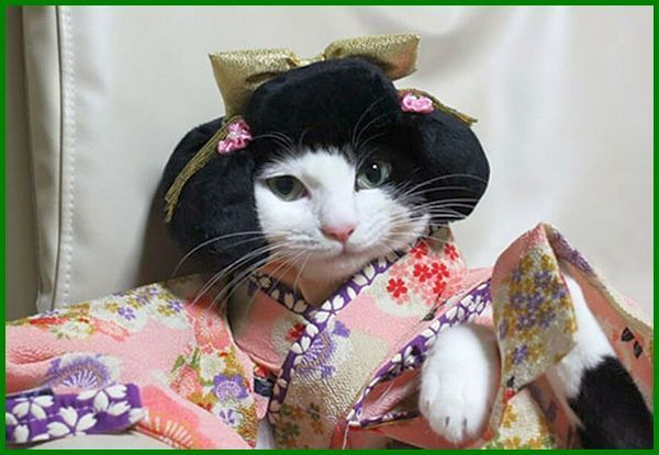 Pin Di Kucing