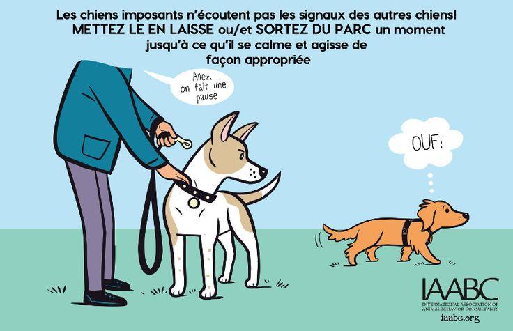 Votre chien est il imposant2