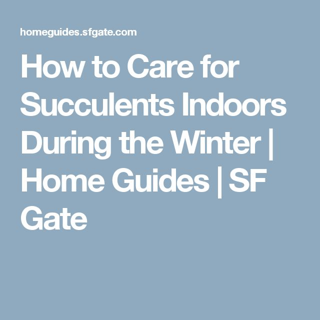 How To Care For Succulents Indoors During The Winter The