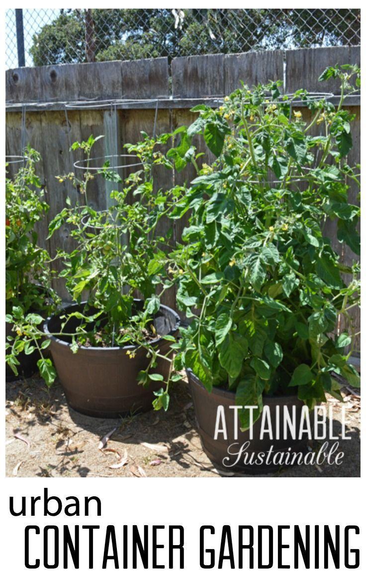 Growing vegetables in a container garden gardens grow for Grow your own vegetable garden