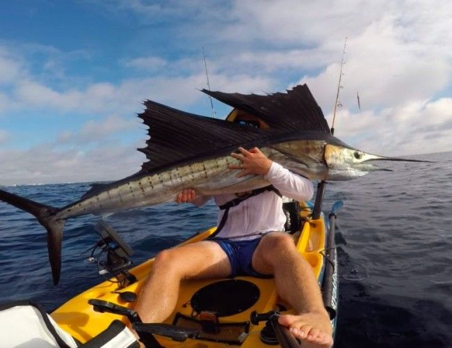 Florida offshore Kayak Fishing Charters offered in Southeast Florida where we target large Pelagic fish. Visit our website for charter and trip information!