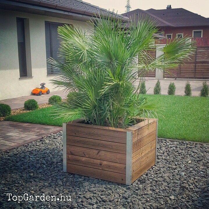 #garden #palmtree #gardendesign #topgarden #kerttervezes #kert #garten #andezit #modernstyle