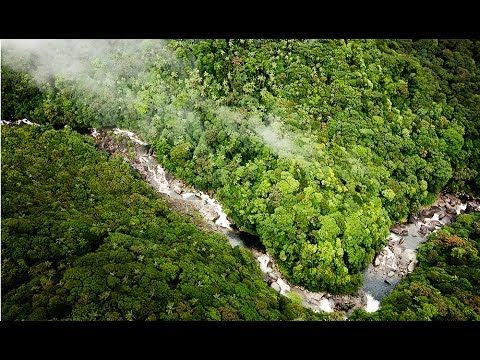 World Heritage-listed Daintree National Park: land before time - YouTube
