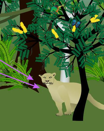Tropical Rainforest Food Web Experiment | Education.com