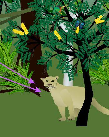 Science Fair: Tropical Rainforest Food Web