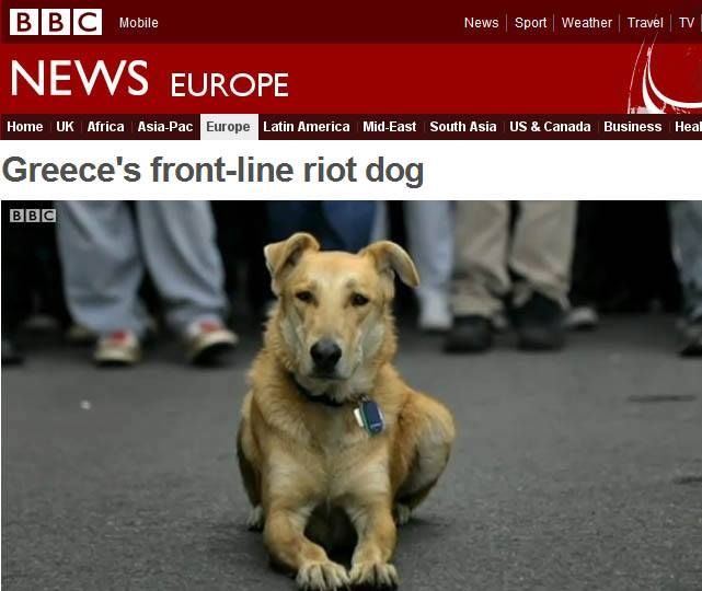 Greece's Front-Line Riot Dog